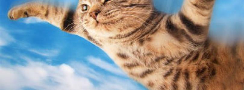 Bobina – Flying Kitten (Original Mix) [Magik Muzik]