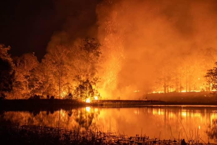 australian bushfire fundraiser event